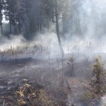 Waldbrand in Annerod