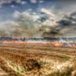Laubgebläse im Brandeinsatz