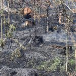 Gefahr für Wald- und Flächenbrände hoch